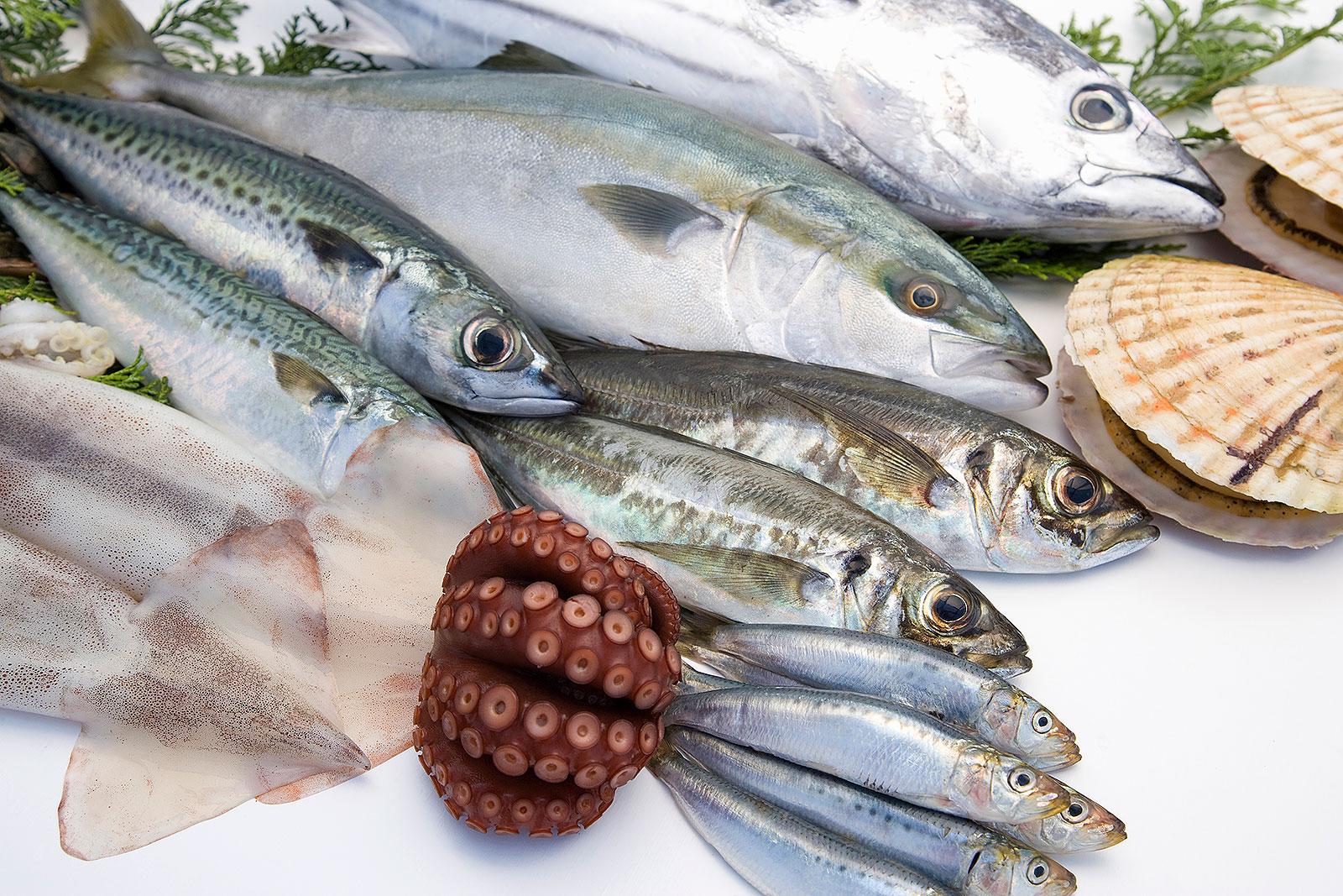 Marine Product Manufacturing - Fishing