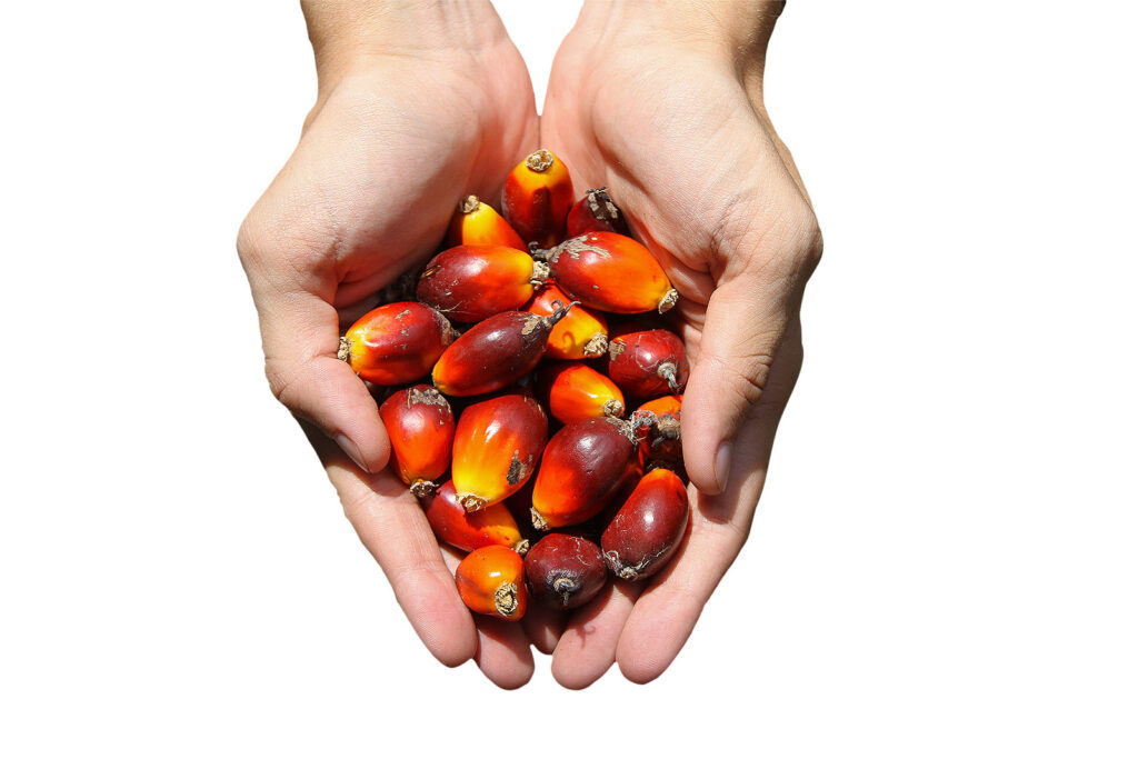 Palm Oil & Environmental Technology